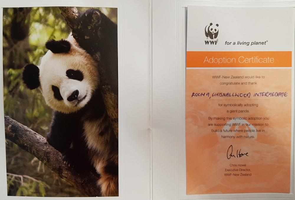 Panda Adoption Kahawai Team 9 Newsletter 5
