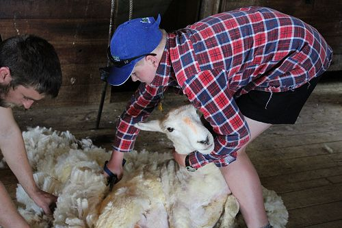 PIA class shearing with Phil and Allan Oldfield