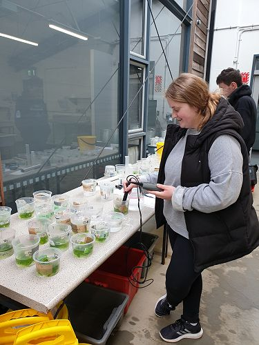 Olivia King- seaweed photosynthesis in reduced pH