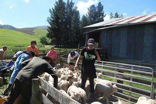 PIA Animal Handling