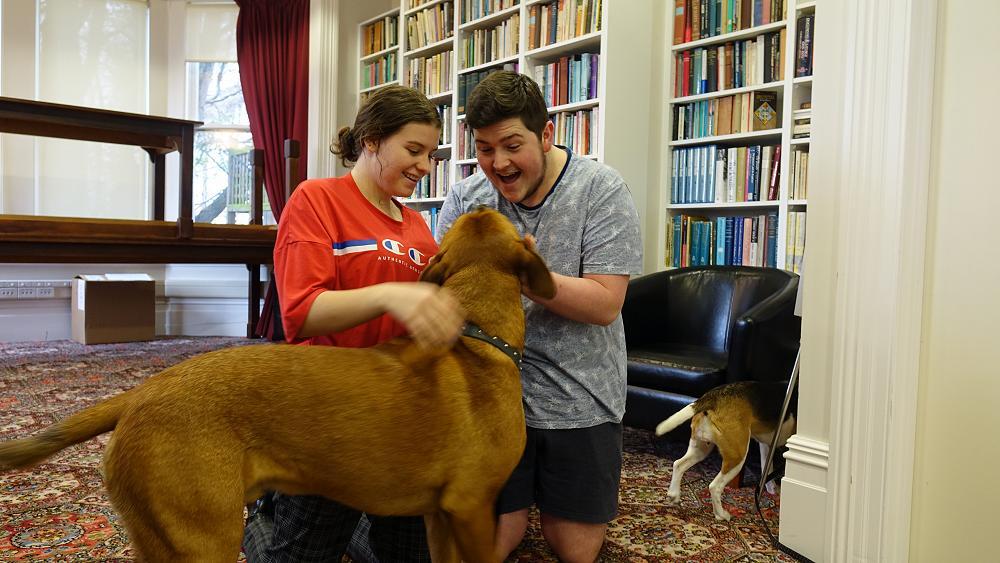 Dog Cuddle Fix, 13/9/19