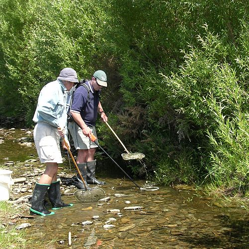 Otago Fish and Game Council operations manager Ian Hadland  and ranger  Ralph Hayburn conduct electric fishing survey on a small Otago stream. Ian will take part in the festival event.