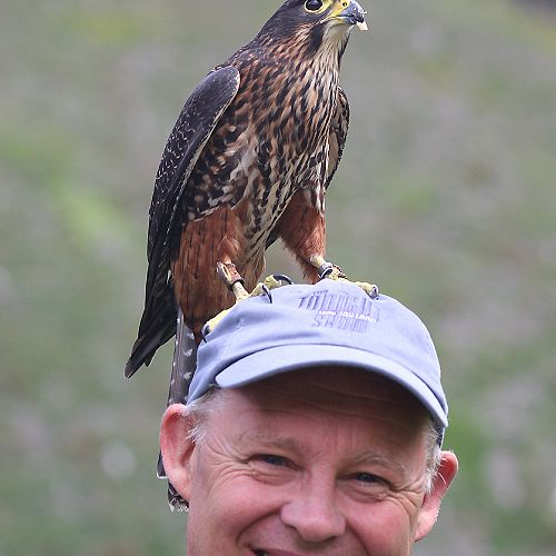 Ruud and Ruby the Falcon.