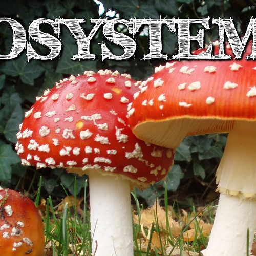Video: Understanding Ecosystems for Kids: Producers, Consumers, Decomposers - FreeSchool