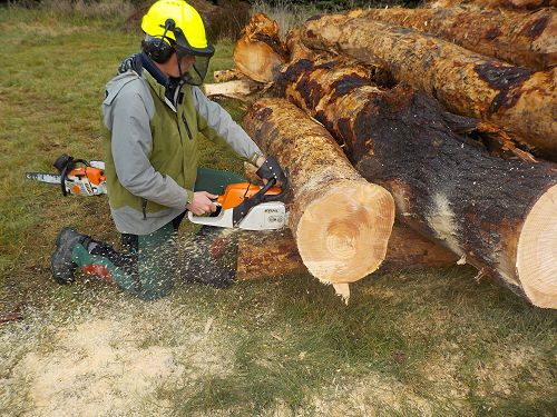 Chainsaw Assessment