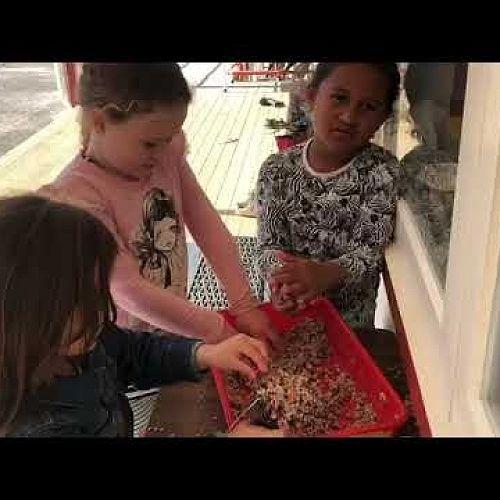 Video: Bird feeders