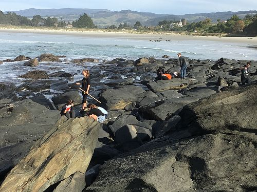 12 Biology trip to Rocky Shore