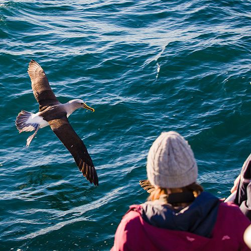 Getting up close to wildlife on a Monarch Wildlife Cruise.