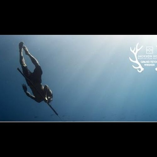 Video: Jago A Life Underwater