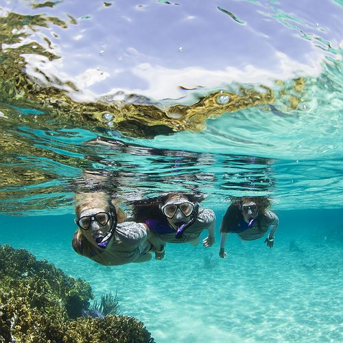 Snorkelling with Dive Otago