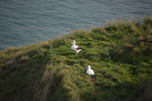 International Trip to Albatross Colony