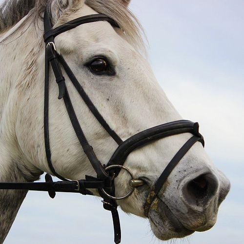 The Horse - Cameron Leydon