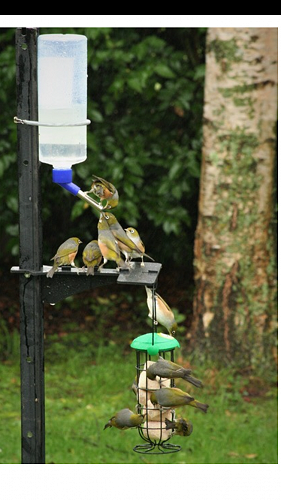 "Peka Peka bird feeder in action!  One of these will be won at ""Feeding Birds in the Garden"" with Tahu Mackenzie and Harvey Penfold on Friday 26 April at NatureHQ."