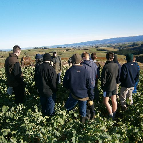 Year 11's inspecting a crop of swedes in Waitahuna.