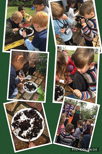 Exciting learning for Y1!