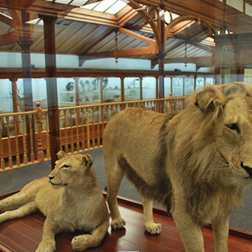 Dunedin's famous Animal Attic at Otago Museum