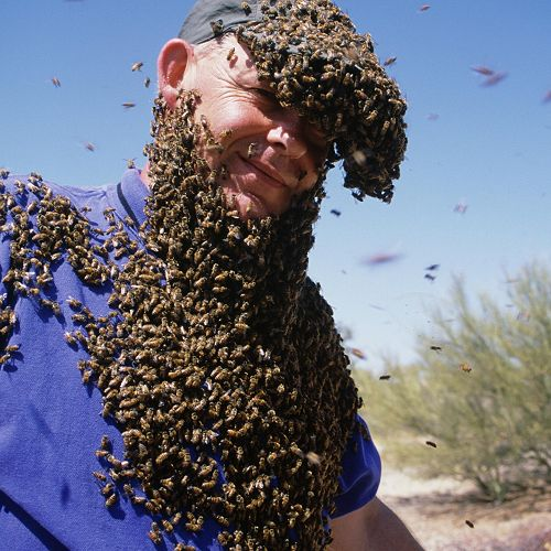 "Ruud Kleinpaste covered with killer bees during the filming of ""The Biggest and Baddest Bugs"""