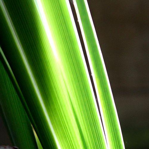 Grass - Danny Adams