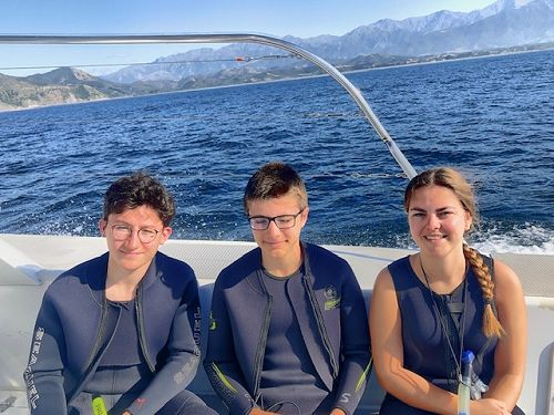 Swimming with the dolphins in Kaikoura