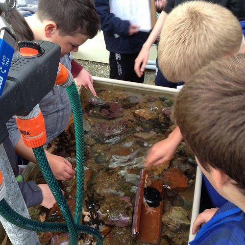 Mighty Molluscs Hunt.  Year 9 Science Field Trip.  Portobello Aquarium.