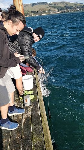 Level 3 Earth and Space Science NZ Marine Studies