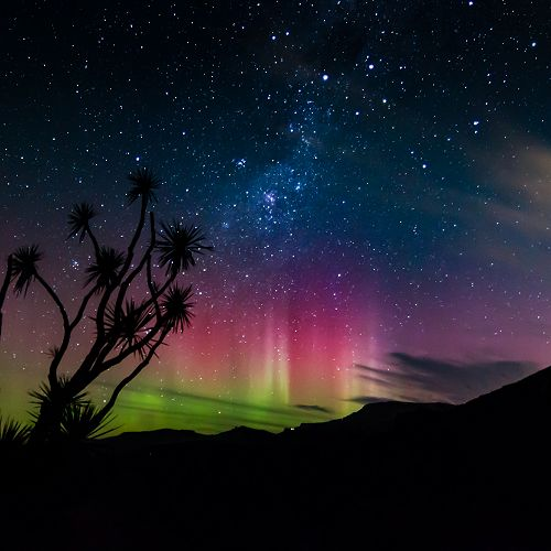 The winning entry in the 2017 Otago Peninsula Photo Competition