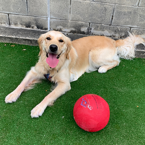 Tilly enjoying some lunchtime fun during her work day