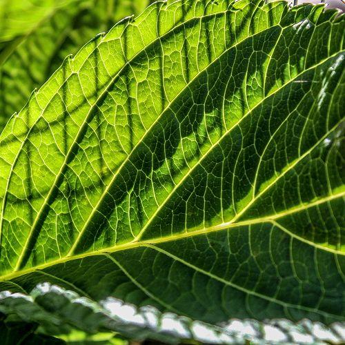 Leaf - Danny Adams