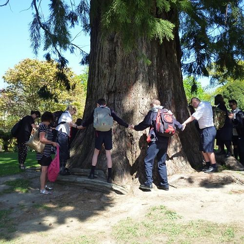 Ilam Gardens challenge. The class join hands around the biggest tree.
