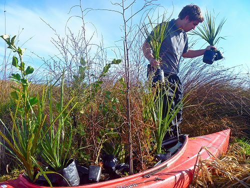 Plant and Paddle day is planned at Te Nohoaka o Tukiauau/Sinclair Wetlands on Sunday 24 April from 10am.