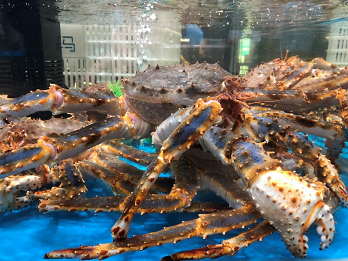 King crabsmake for a dramatic dish and are excellent eating, making them very popular in China recently.