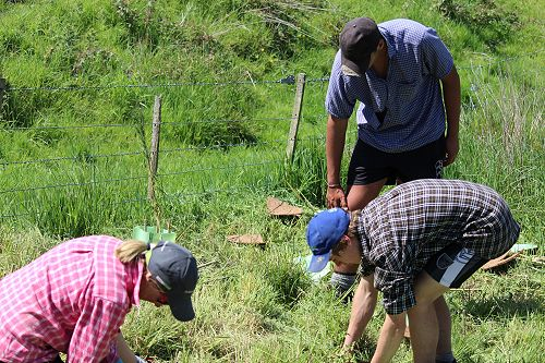 PIA Tree Planting
