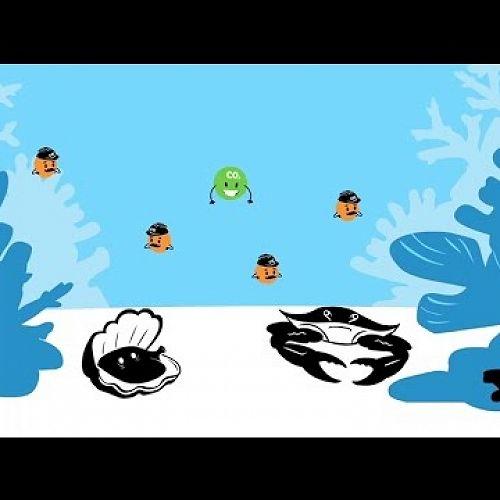 Video: ACE Science Short: Ocean Acidification