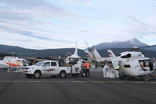 Lobsters were carried onto a waiting chartered aircraft