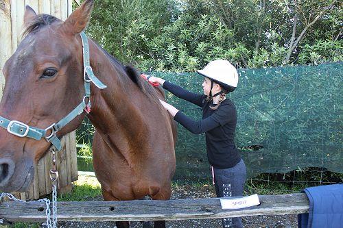 Horse Trekking Activity