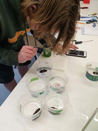 Riley Allibone- feeding response of half crabs in