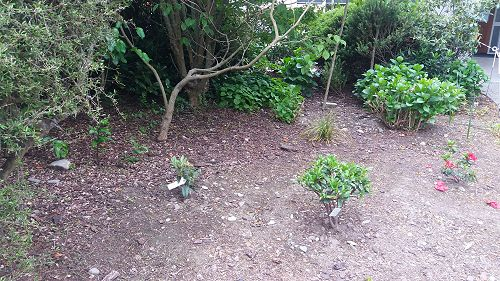 GHS Planting