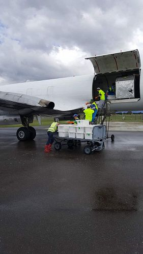 Te Anua Charter Flight