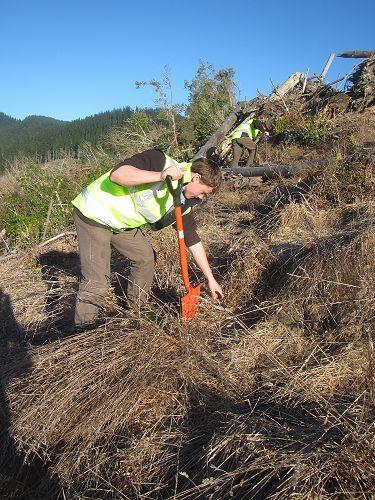 Hamish Scannell tree planting