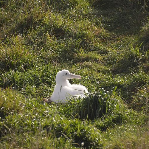 International Trip to Albatross Colony