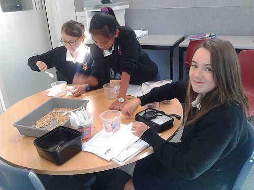 Year 8 students discovering about birds beaks