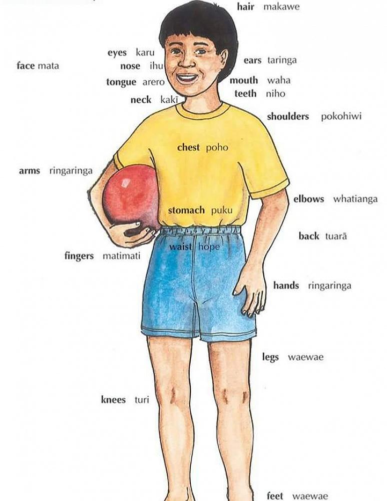 This Week We Will Look At Words Describing Our Body Parts
