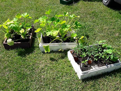 Seedlings on sale with profits going back to the g