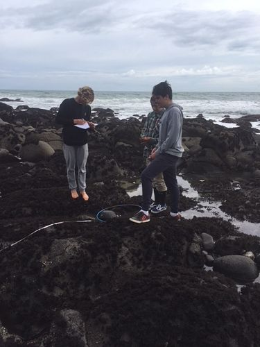 Level 2 Biology students investigate the rocky shore at Whale Bay.