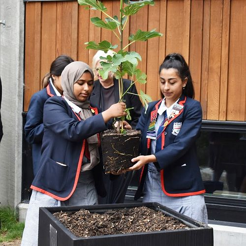 Planting of the Fig tree in commemoration of March 15th 2019