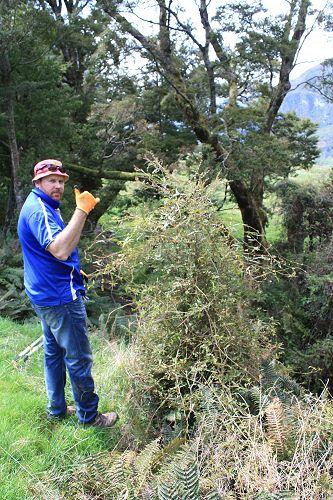 Charlie tackles the bush lawyer vine