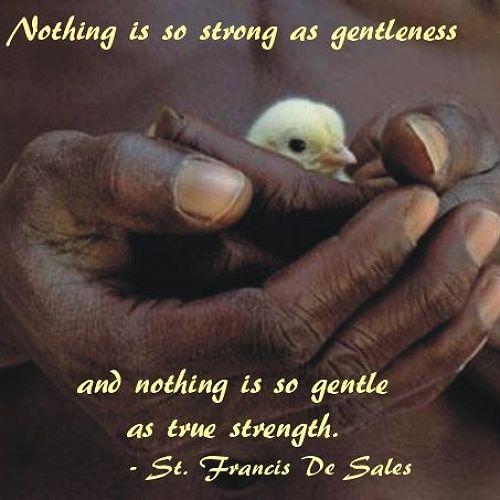 Virtue of the Week - Gentleness