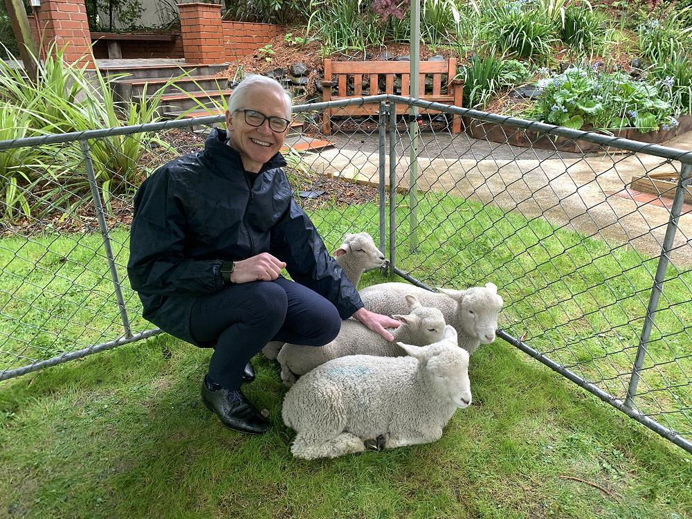 Lamb Cuddle Fix
