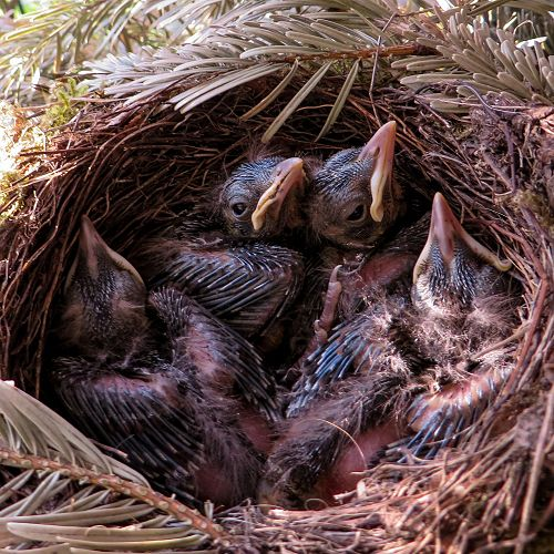 Birds have nests