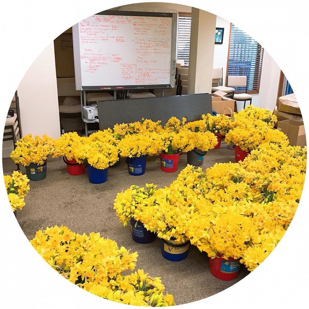 Daffodil Day, 31/8/18